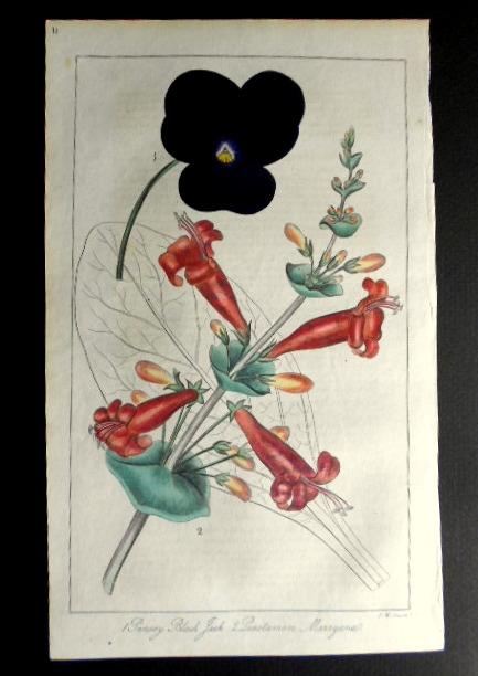 画像2: ロバート・マーノック Robert Marnock ,ボタニカルマガジンVol.1(1836〜7年)
