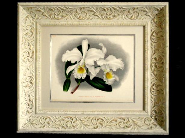 画像4: SALE! リンデン1889年「Cattleya Mossiae. 445」