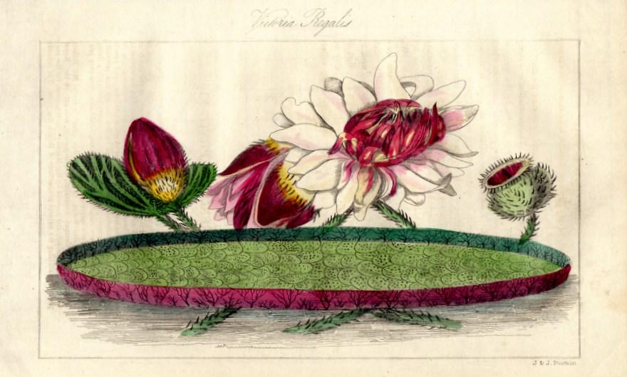 画像3: ロバート・マーノック Robert Marnock ,ボタニカルマガジンVol.4(1839〜40年)