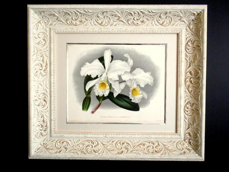 画像2: SALE! リンデン1889年「Cattleya Mossiae. 445」