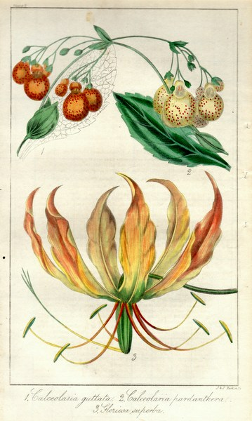 画像1: ロバート・マーノック Robert Marnock ,ボタニカルマガジンVol.1(1836〜7年)